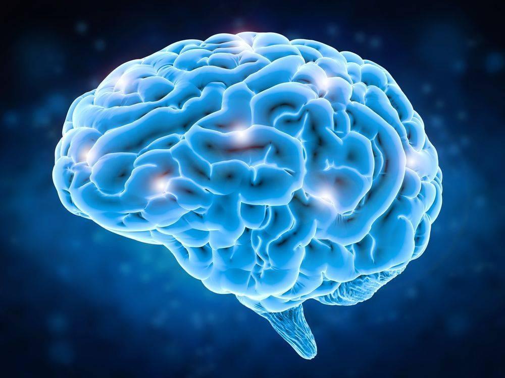 intelligenza cervello